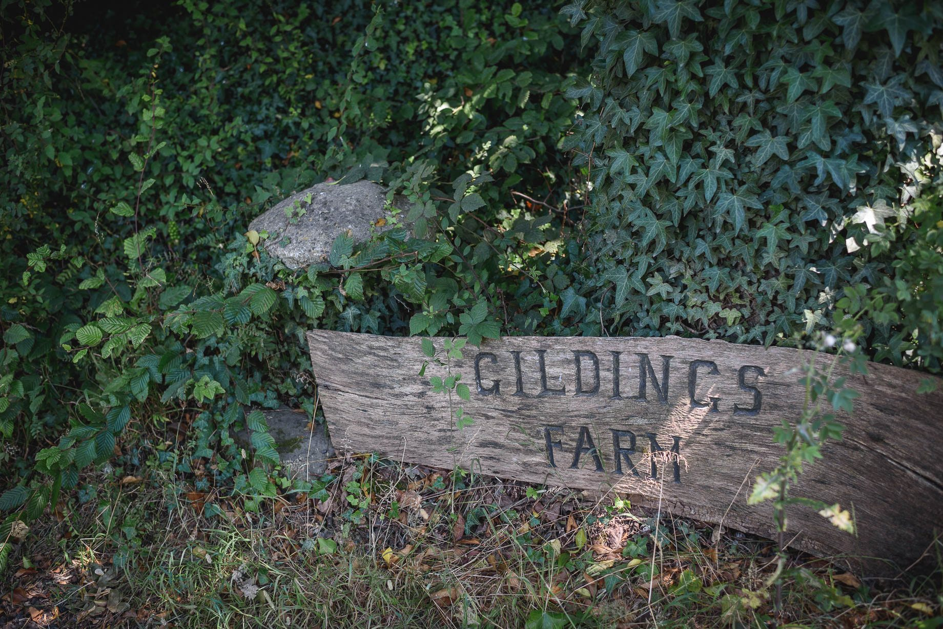 Gildings Barn wedding photography - Sarah and Steve (104 of 190)